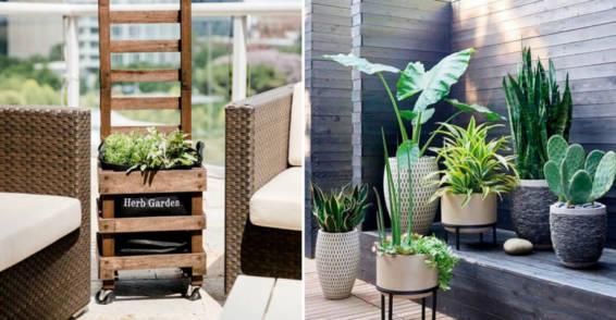 Apuesta por Plantas aromáticas y Cactus