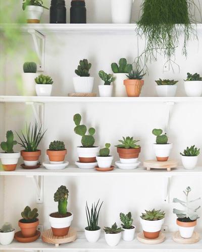 plantas-decoracion-espacios-pequeños