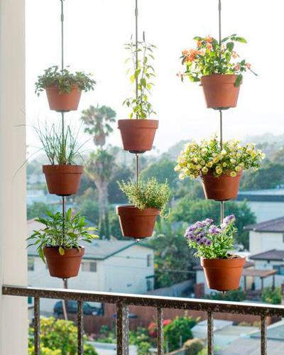 plantas-verticales